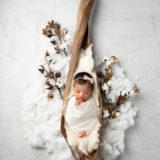 Cotton-Pod_FB